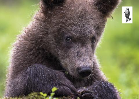 Sweet baby bear