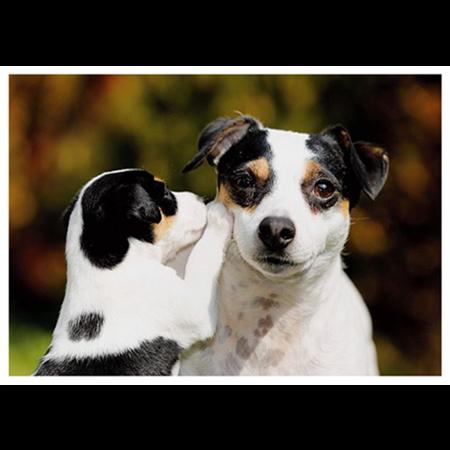 Koiranpentu kuiskaa
