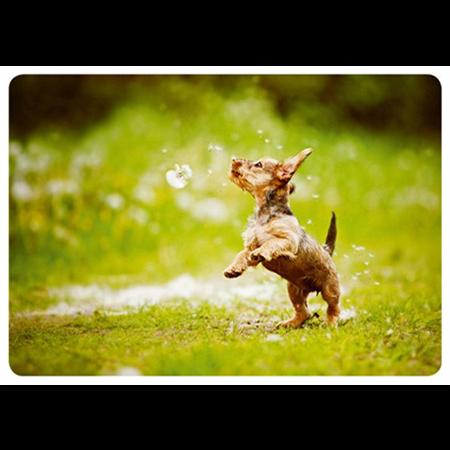 Dog's summer dance