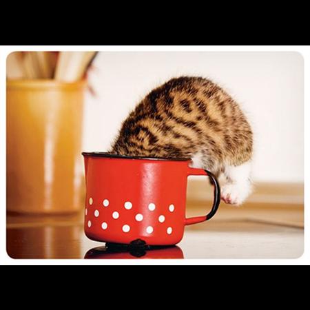 Kitten in a mug