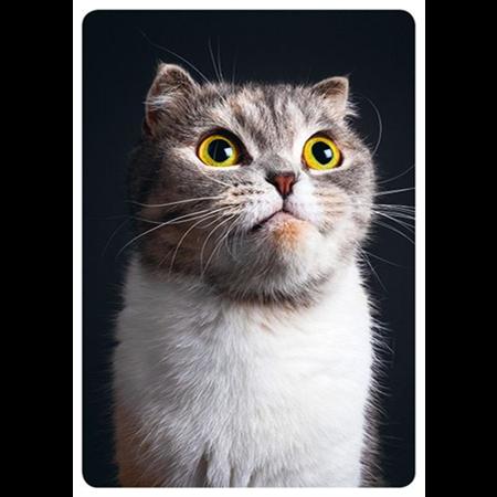 Kissan poseeraus