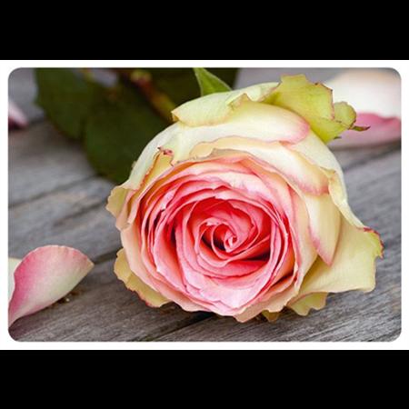 Pastellin värinen ruusu