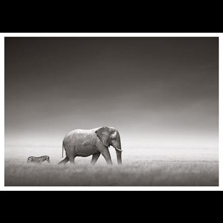 Seepra ja elefantti