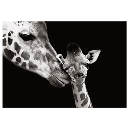 Giraffe's motherly love