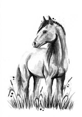 Kotieläimet - Hevonen
