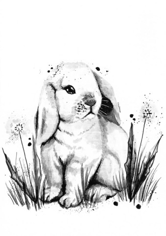 Domestic animals - Bunny