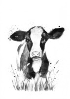 Kotieläimet - Lehmä
