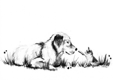 Kotieläimet - Koira ja kissa