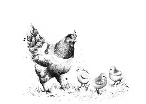 Domestic animals - Chicken and chicks