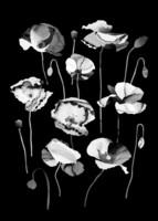Utuliini - Poppies in the midnight