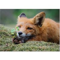 Fox - Should we play?