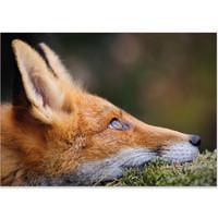Fox - You are in my dreams