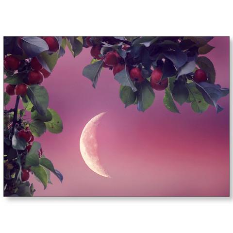Moonlight - August