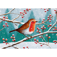 Winter European robin