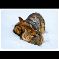 A hug in the snow