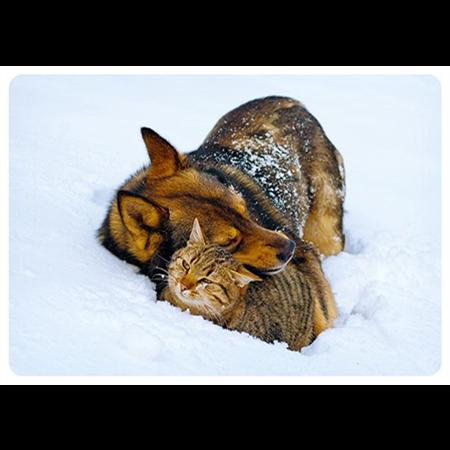 Halaushetki lumihangessa
