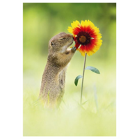 The squirrel smells the flower