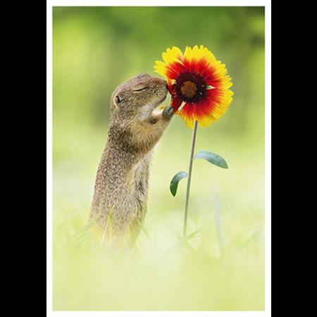Orava haistelee kukkaa
