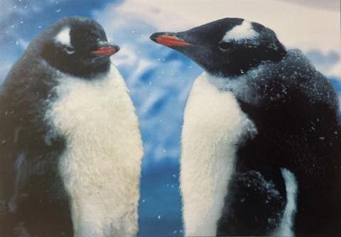 Pingviinipari