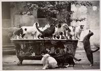 Herd of cats in the bathtub