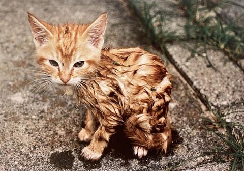 Märkä kissanpentu