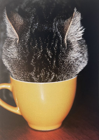 Cat and cup
