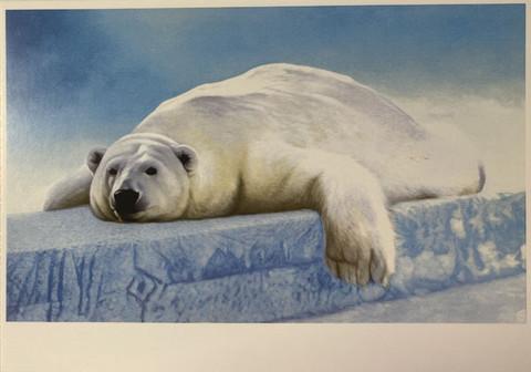 Jääkarhu makailee