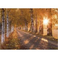 Jukka Risikko - Autumn birch trees