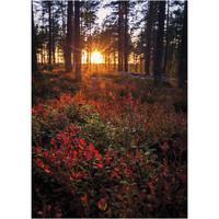 Jukka Risikko - Autumn colors