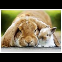 Big and small bunny