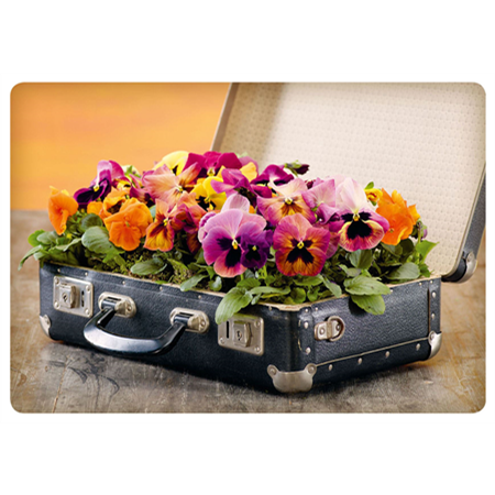 Pansies in a suitcase