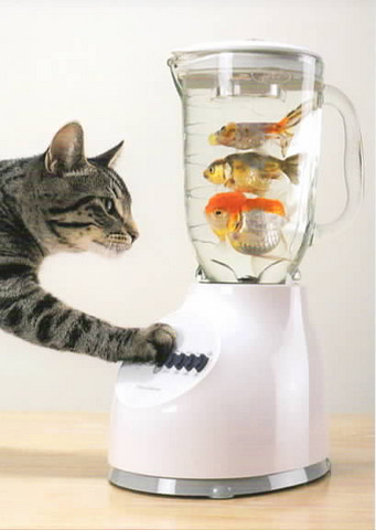 Cat and fish blender