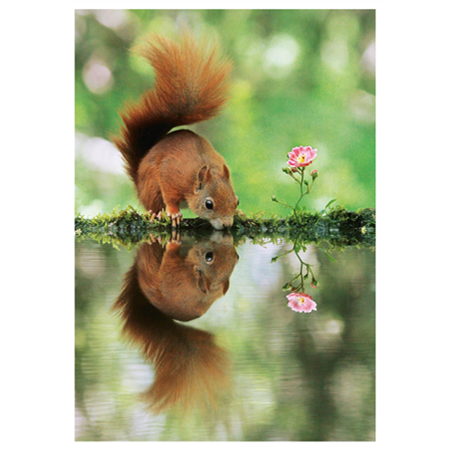 Orava juomassa