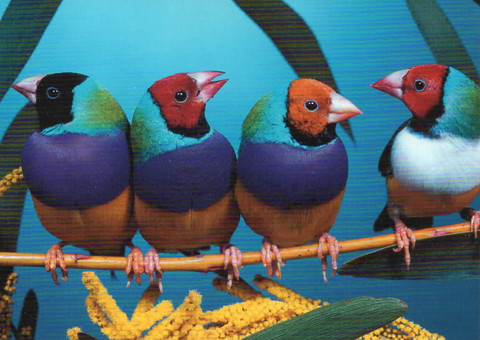 Colourful birds