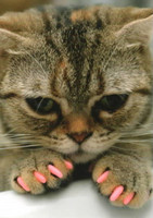 Cat with pink nails