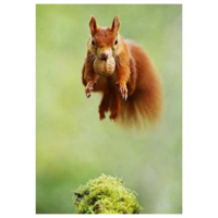 Squirrel jumps