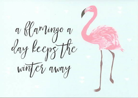 A flamingo a day
