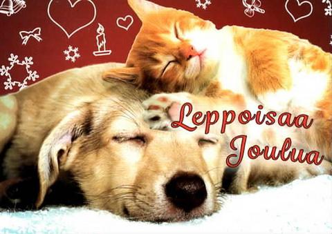 Christmas postcard - Pets #21