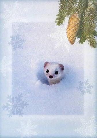 Christmas postcard - Weasel