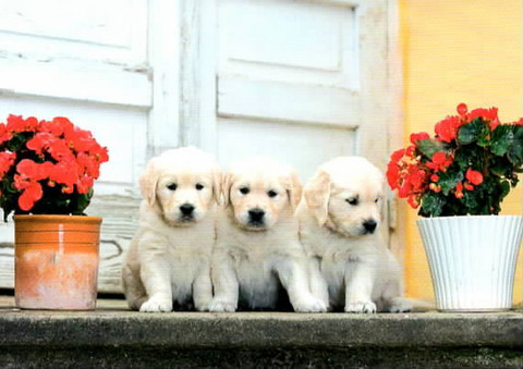 Puppies on the stairs