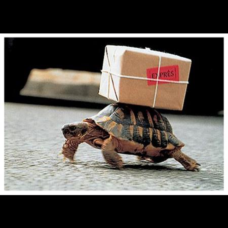 Express turtle
