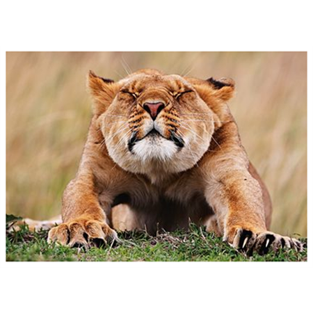 Lion stretching