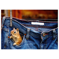 Squirrel in a pocket