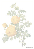 Vintage flowers - writing papers (A4, 10s) #2