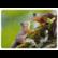 Oravien pusuhetki