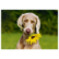 Dog and sunflower