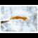 Orava hyppää lumessa