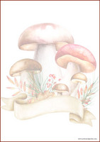 Mushrooms - writing papers (A4, 10s) #1