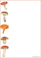 Mushrooms - writing papers (A4, 10s) #3