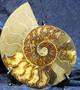 Ammoniitti halkaistu 17,5cm 586g fossiili